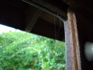 Spiders at work by Bird observation slats