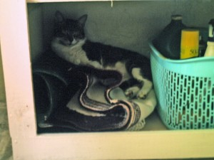 Kitchen was under renovations, no doors were installed and so my 'son' found himself a new nap-spot