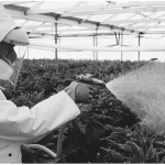 agriculture-spraying
