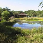 Wetland-Shoot Hut 020703