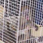 Baby Monkey1