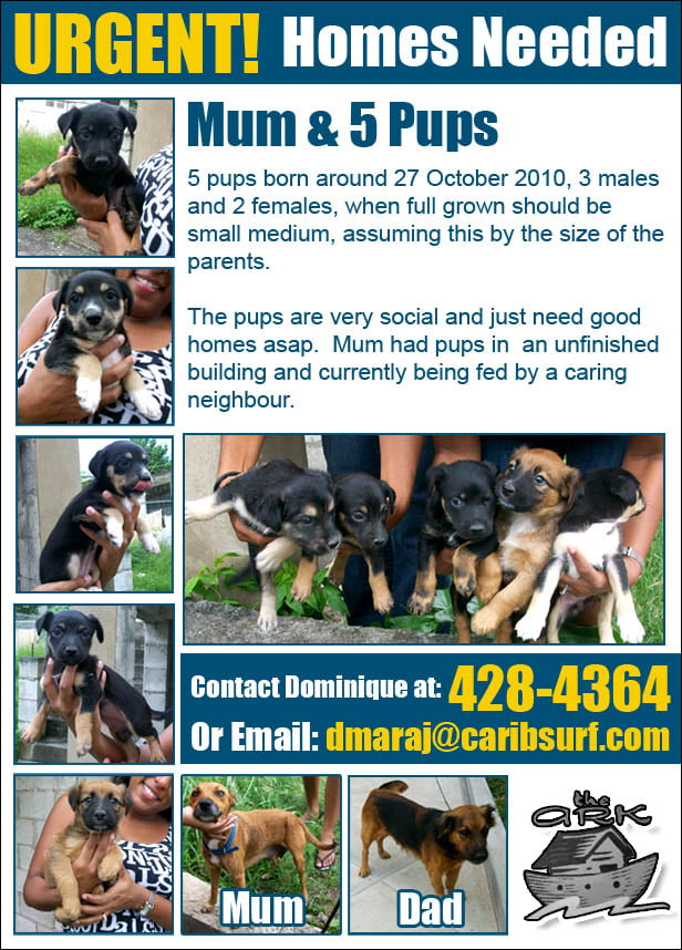 Urgent Appeal Issued For Teenage Boy 14 Missing After: URGENT APPEAL FOR BARBADIAN DOG