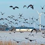 wind turbines birds