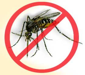 (FILE IMAGE) The increase follows an international trend. The World Health Organization says that during the past five decades, the incidence of dengue has increased 30-fold.