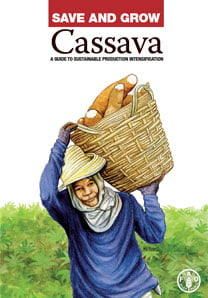 Several factors are driving the rising demand for cassava. It is a highly versatile crop grown by smallholders in more than 100 countries. Its roots are rich in carbohydrates while its tender leaves contain up to 25 percent protein, plus iron, calcium and vitamins A and C.  Other parts of the plant can be used as animal feed, and livestock raised on cassava have good disease resistance and low mortality rates.