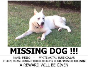A white Akita that answers to the name Meelo and is usually in the Union, St. Phillip area. Please spread the word.