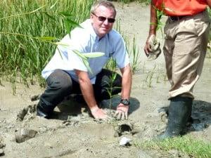 Head of the EU Delegation to Guyana Ambassador Robert Kopecky plants a mangrove seedling.