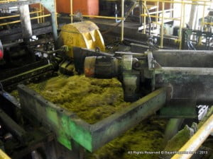 (CLICK FOR BIGGER) Everything is used from the canes, even the fibre left after grinding is reused as fuel to heat the very hot boilers, and the sifted mud is returned to the field to help more canes grow for a new process...