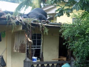 {IMAGE VIA - SLU News Online} A few days ago, St. Lucia News Online posted a photo of a live goat on a roof in Bexon during the flooding. This photo shows a dead cow on a roof in St. Vincent & the Grenadines during the flood. Both islands were hit the hardest by the bad weather.