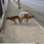 dogs threesome memecenter