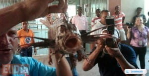 This lionfish last Saturday attacked a young swimmer in Boca Chica. {IMAGE VIA - El Dia}