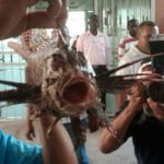 This lionfish last Saturday attacked a young swimmer in Boca Chica1