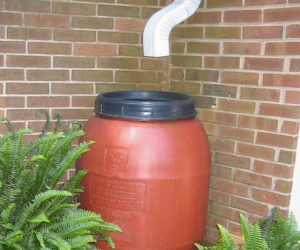 Try making a rain catcher at home to water your plants with, rain water is much better for them. Also try putting your empty eggshells in your vegetable gardens - it stops the slugs from getting to them!