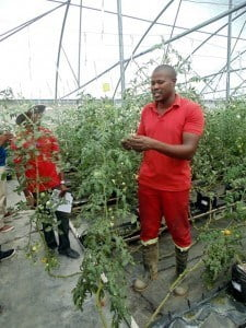 The facilitator was Mr. Jervis Rowe, a Jamaican national and President of the Jamaican Greenhouse Growers Association since 2008. He is a practicing greenhouse businessman who has extensive experience and knowledge in the field of Protected Agriculture.
