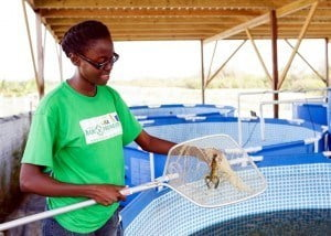 Seatonia Blackman, a budding agriculturist, is intrigued by crayfish. Her, she monitors their progress at Adams Aqualife in St. Thomas where part of a workshop on aquaculture took place.