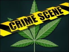 3,290 cannabis plants were seized from communities in two rural parishes. They were discovered under cultivation, concealed in bushy areas and they ranged between 6 inches to 9 feet.