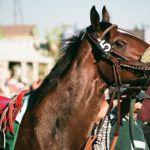 Pinnacle Feeds Ltd Midsummer Creole Classic Raceday