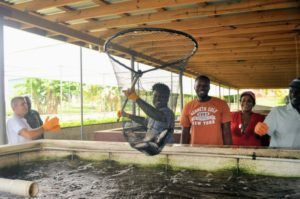 "Under the official name, ""Advancing aquaponics through improved market access: Towards a Caribbean Blue Revolution"", the four-day training aims to strengthen the contribution of aquaponics systems in regional and national food security and nutrition."