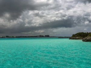 The Bahamas is not only a popular vacation destination, it's home to numerous species and wildlife.