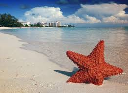 Starfish on the Bahamas beach