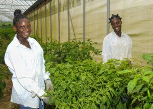 Carina Cumberbatch along with Quiara Callender in one of the greenhouses at Redland Farms